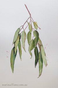 Red Ironbark Gum leaves. Botanical Art by Gela-Marie Williams