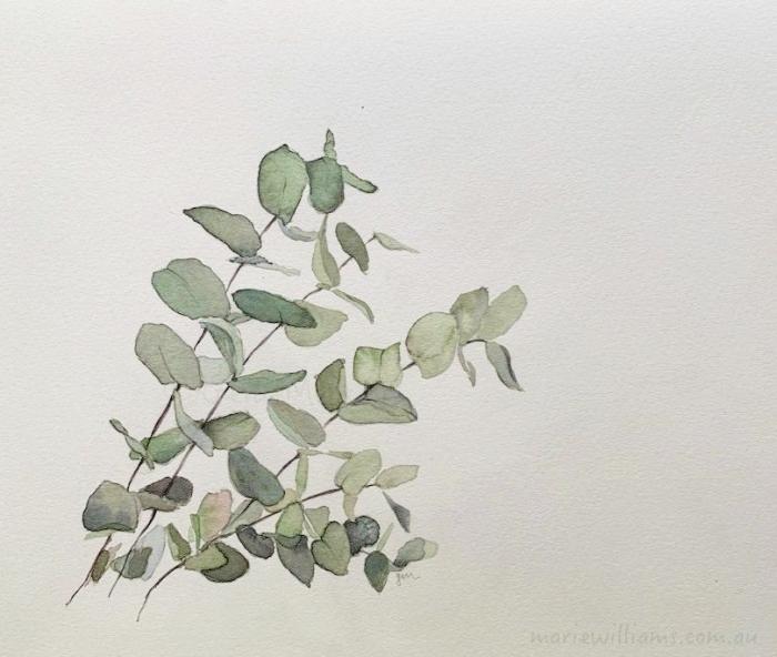 Eucalyptus leaves. Botanical art by Gela-Marie Williams
