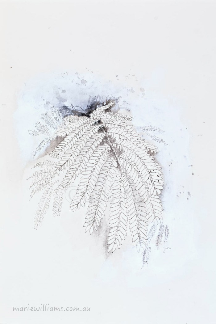 botanical art by Gela-Marie Williams