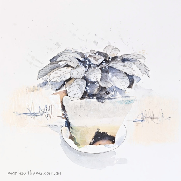 Calathea. Botanical art by Gela-Marie Williams