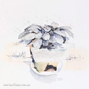 Calathea. Botanical art by Gela-Marie Williams