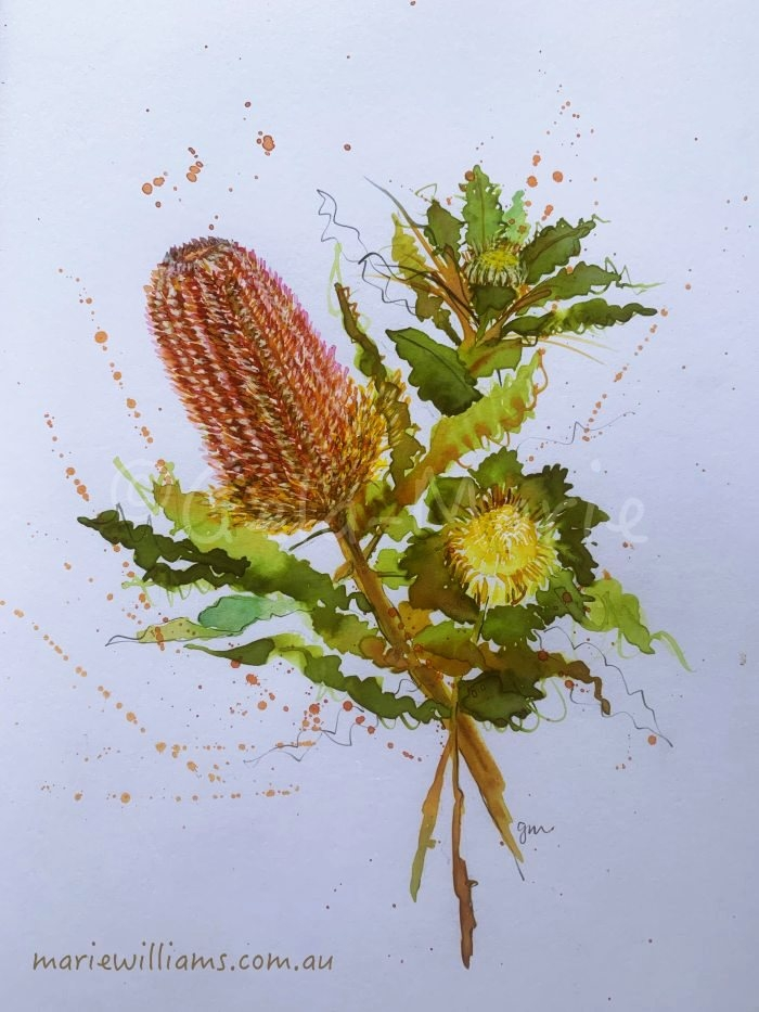 Banksia botanical art by Gela-Marie Williams