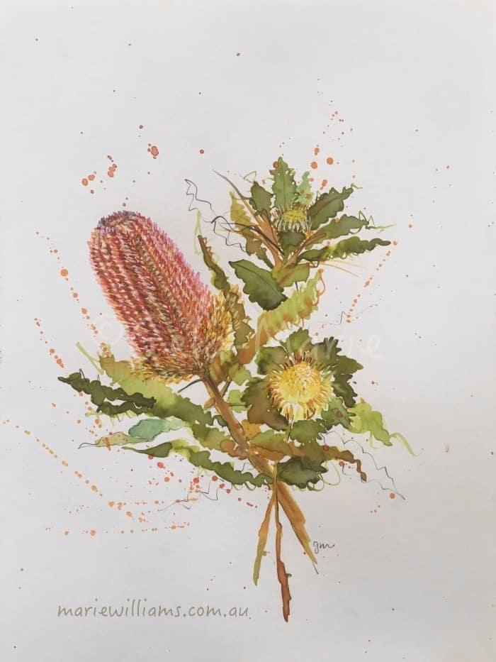 Banksias Botanical art by Gela-Marie Williams