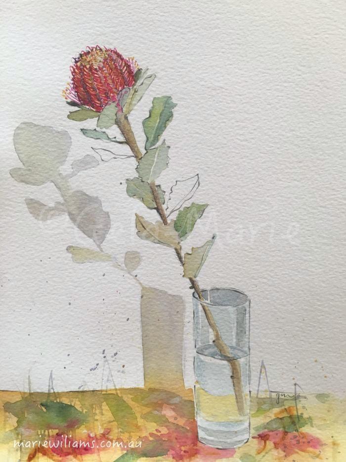 Banksia Coccinea. Botanical art by Gela-Marie Williams