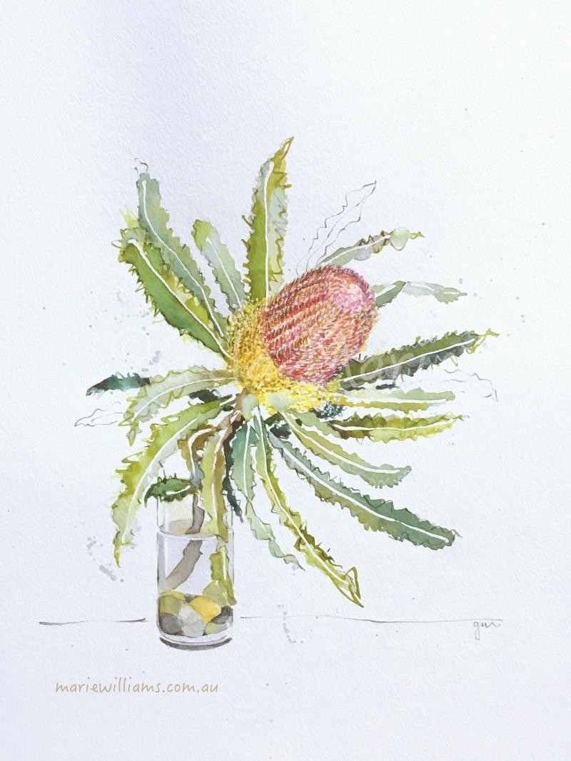 Banksia. Botanical art by Gela-Marie Williams