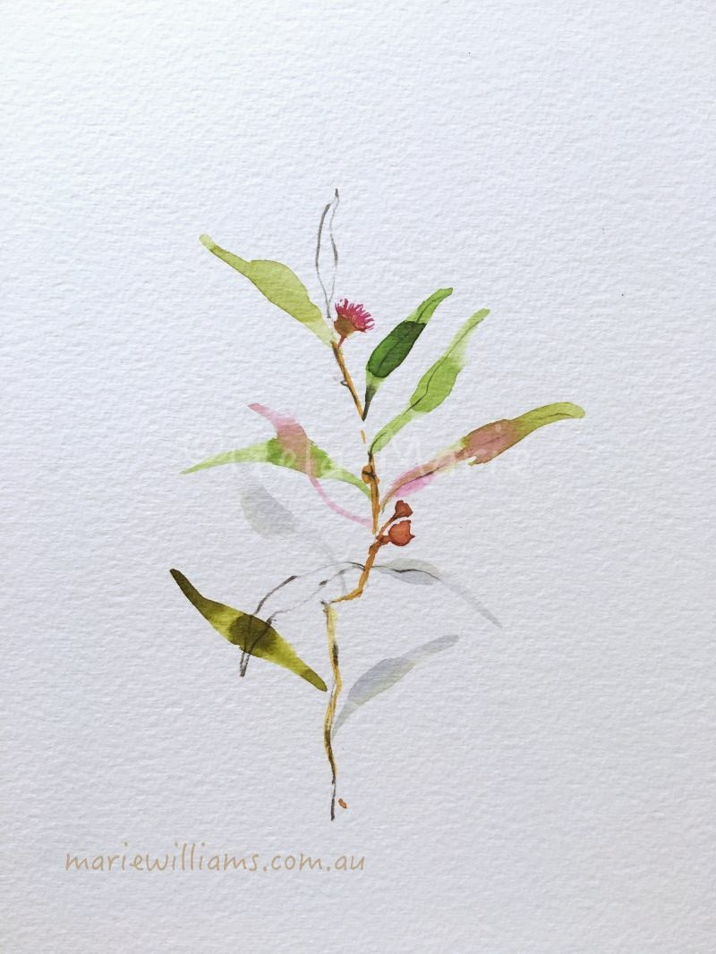 Gum leaves. Botanical Art by Gela-Marie Williams