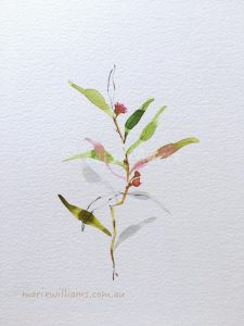Gum leaves. Botanical Art by Gela-Marie Williams