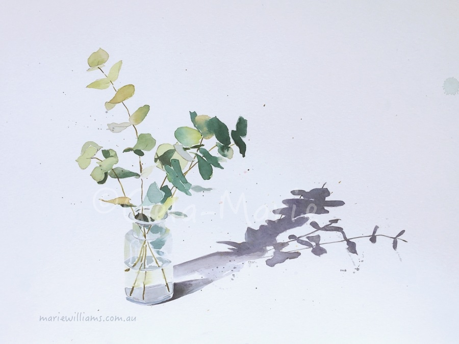 Silver Dollar Eucalyptus. Botanical art by Gela-Marie Williams