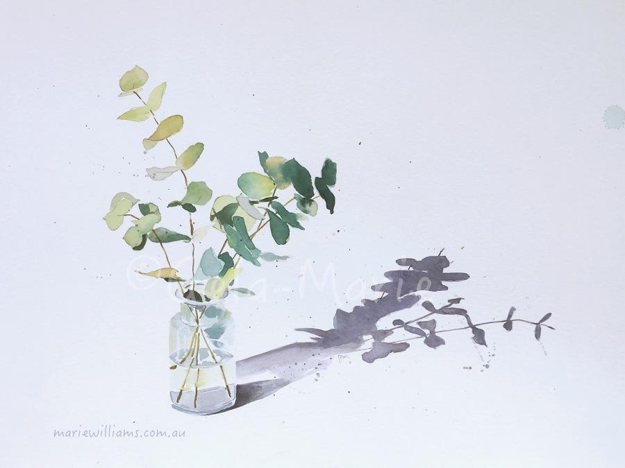 Silver Dollar Eucalyptus. Botanical art by Gela-Marie Williams